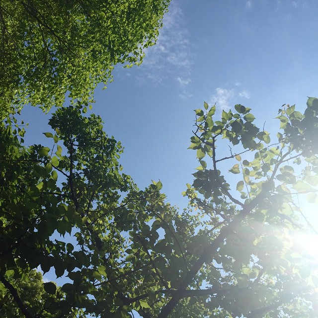 気持ちいいいー♡♡♡#sky #blue #green #happy