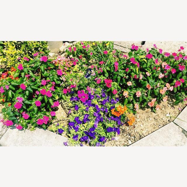 温かさが嬉しかった1日。♡今日もお疲れ様です#flower #thankyou #mayumin