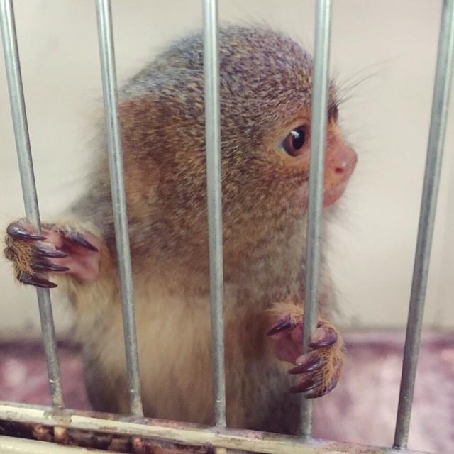 おはよ♡先日動物園にて可愛い子発見️癒される〜〜〜️