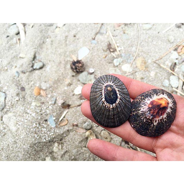 可愛い貝殻見つけた♡...#ellegirlcamp#アクアヴィレッジ#伊豆#下田#海#貝殻