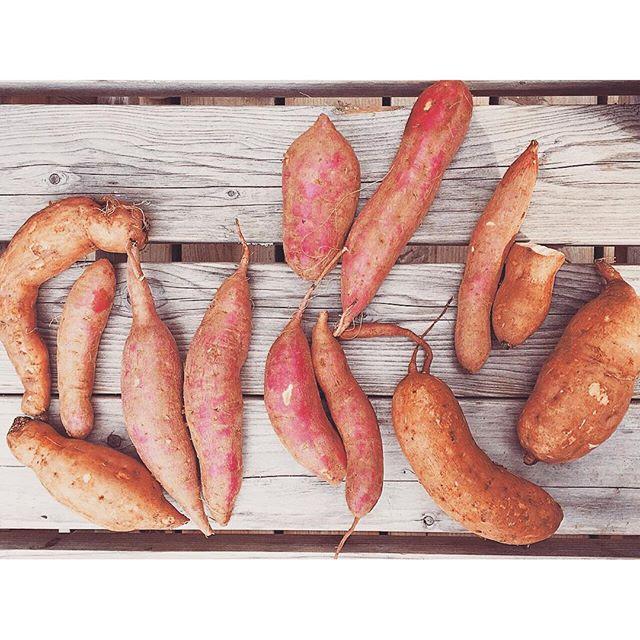 みんなそれぞれ選んだお芋♡...#ellegirlcamp #cooking#野菜#芋#グランピング#伊豆