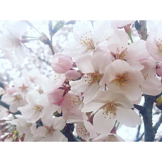 とっても近い♡春は時間の流れもゆっくり穏やかに感じるからとってもすき。...#spring #sakura #shoot#flower #japan #桜