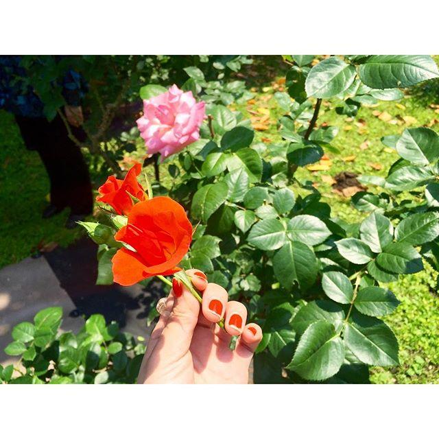 今日もいいお天気😙みんな素敵な一日をねHave a nice day.😇😇😇、、、#gm #flower