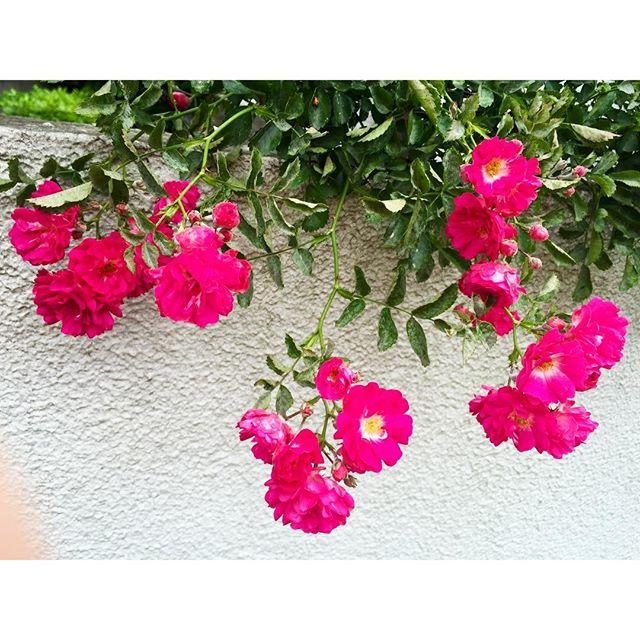 .#happy #flower