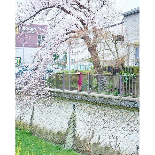 四季。桜の木と同じポーズしてる。笑photo by Takeshi Sinto.#izumisfashion #japan #cherryblossom
