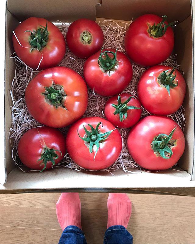 長野県平谷村に初めて訪れましたが、小学校の全校生徒が5人とかの日本で3番目に人口が少ない小さな村🌳大自然の中、みんなでBBQ🥩をしたり、トマト農園をやられている加藤さんにトマト狩りをやらせていただいたり。野菜を作られている方の顔を知りながら食べるトマトの味は、もうそれは格別なものでした。本当に甘くてぷりっぷり。みずみずしくて、こんなに手が止まらなくなる美味しいトマトを食べたのは初めてでした。これは本当にみんなに食べてほしい。このトマトを使ったミネストローネもいただいたので、食べるのが本当にたのしみ!! つづく。。♡#長野県#平谷村 #夏トマト#トマト農園